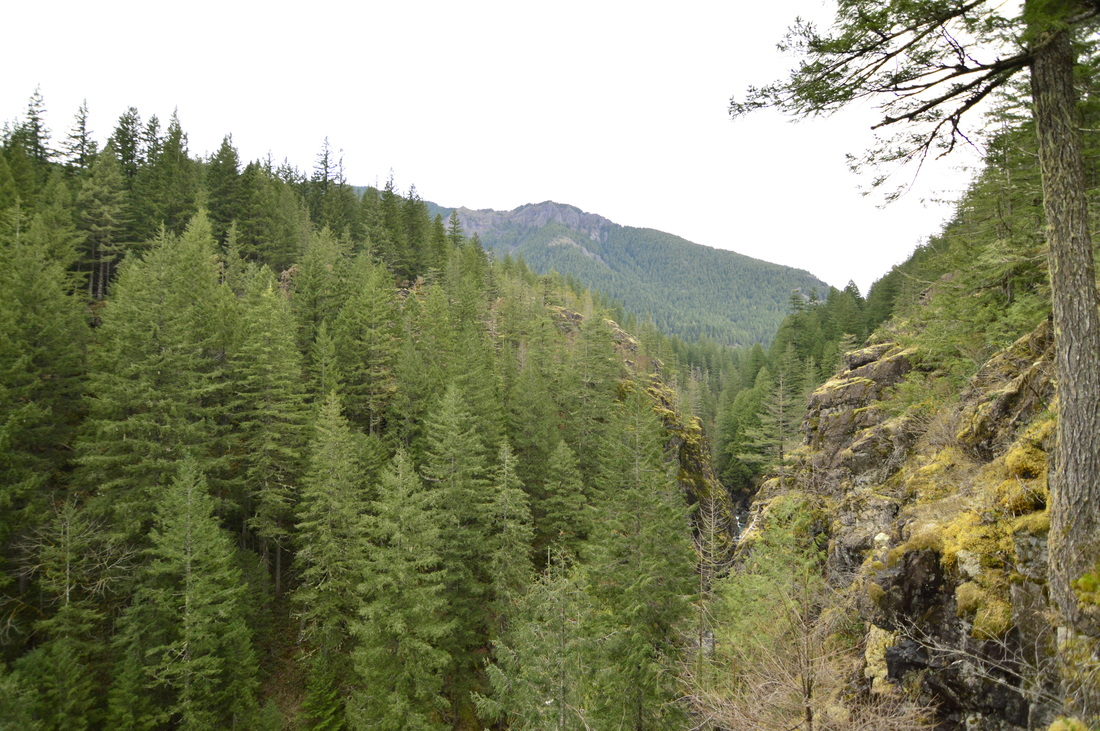 View of Henline Mountain along the Little North Santiam hiking trail
