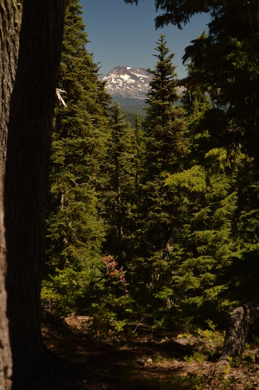 First glimpse of South Sister Pacific Crest Trail Oregon