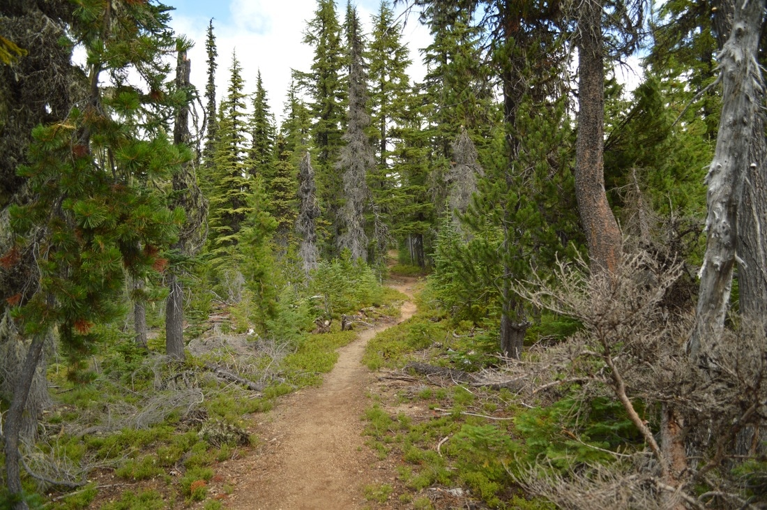 the trail up to Koosah Mountain Pacific Crest Trail Oregon