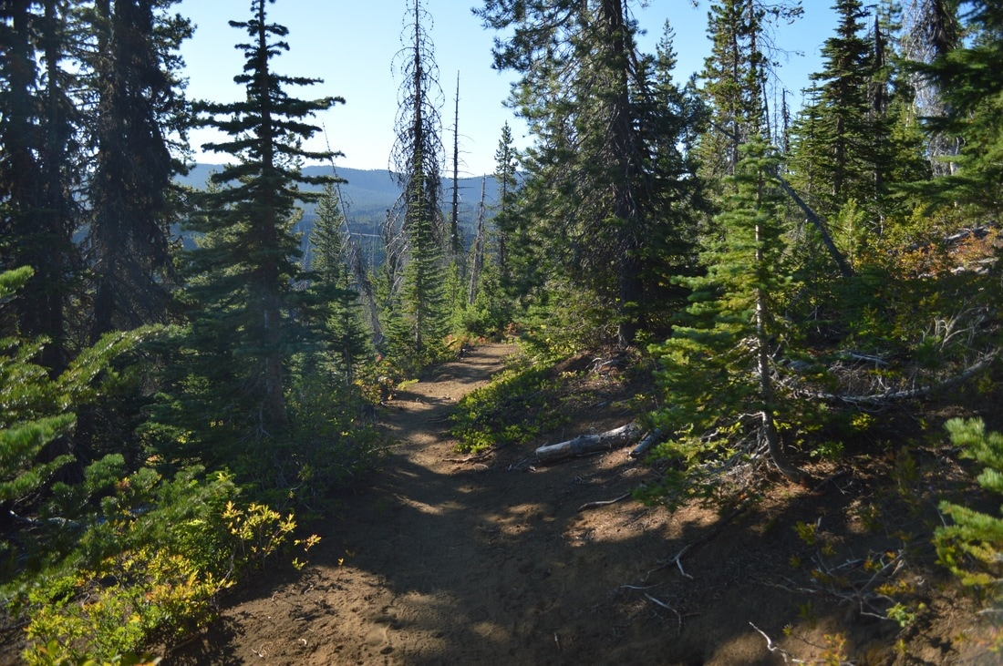 PCT up to Belknap Crater Pacific Crest Trail Oregon