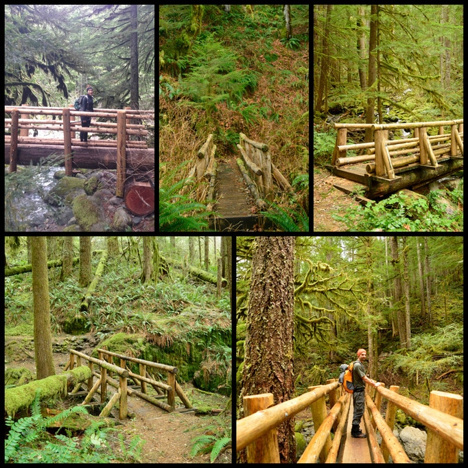 The five bridges along the Little North Santiam hiking trail