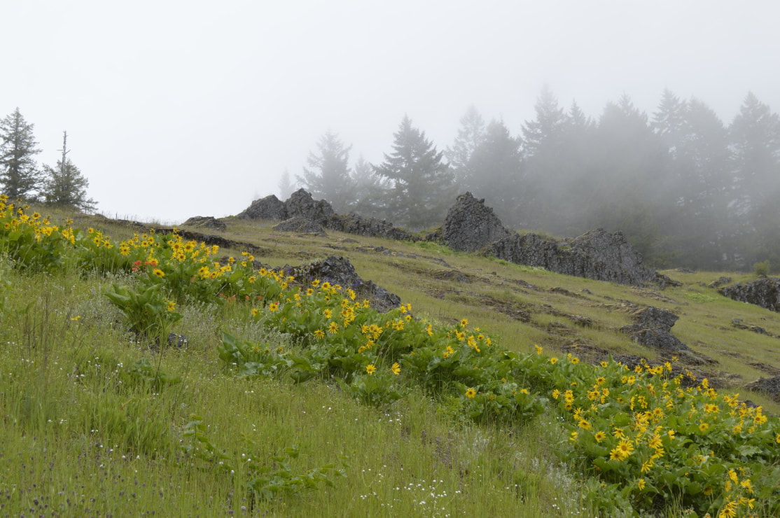 The Last Meadow with flowers along the Tire Mountain trail