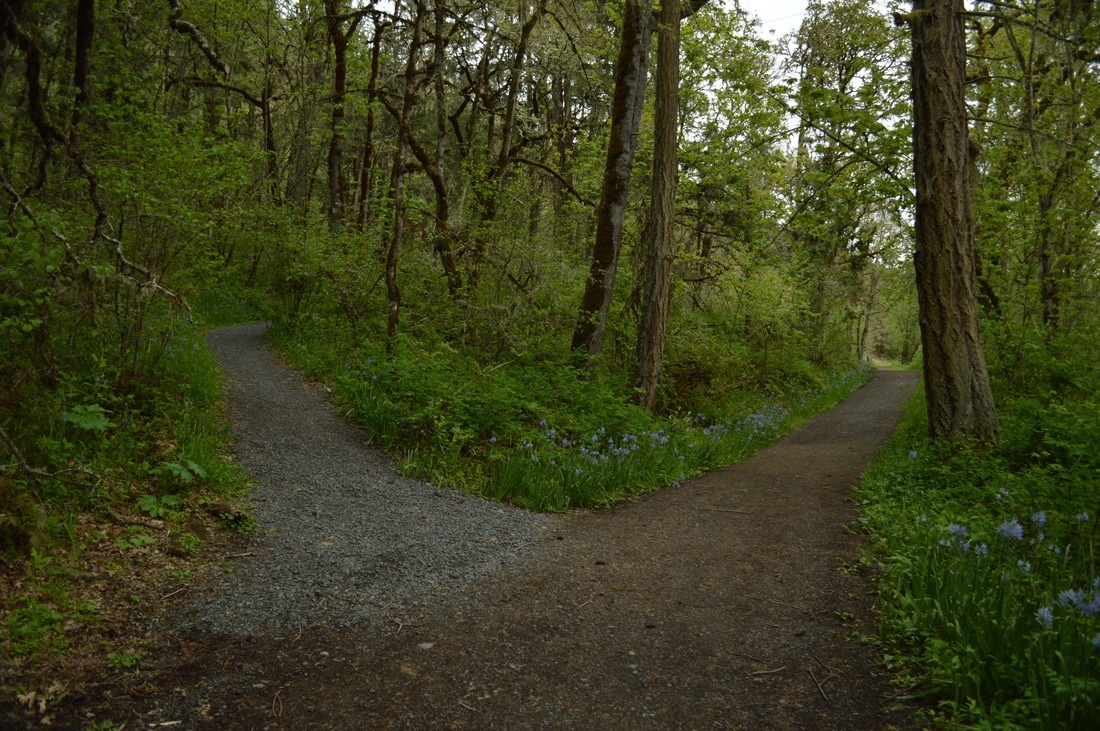 South Boundary and Buford trail trail split at Mt. Pisgah Arboretum
