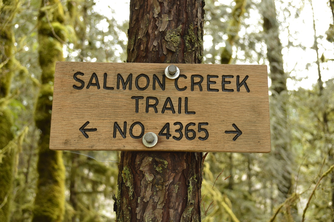 Salmon Creek trail no. 4365 wooden sign on a tree