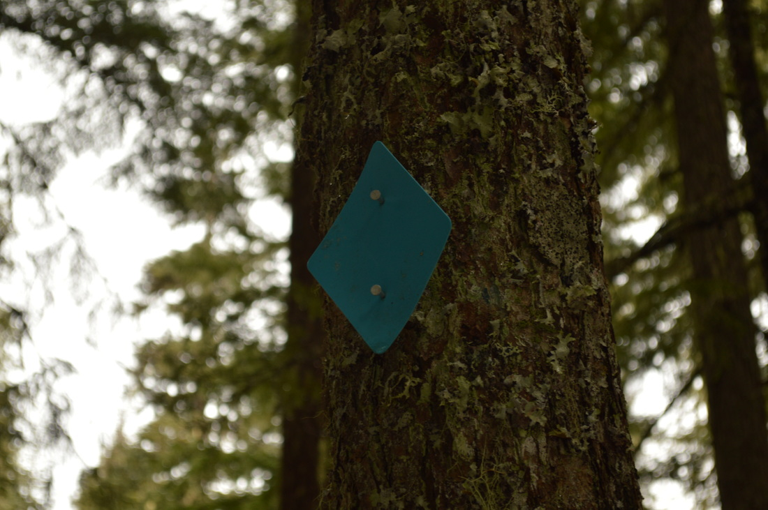 Blue diamond on the tree marks the trail in the winter