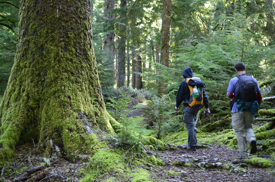 Gwynn Creek, top 10 Oregon winter hikes