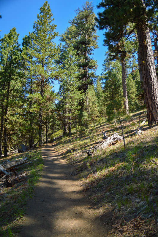 Black Butte trail through the forest