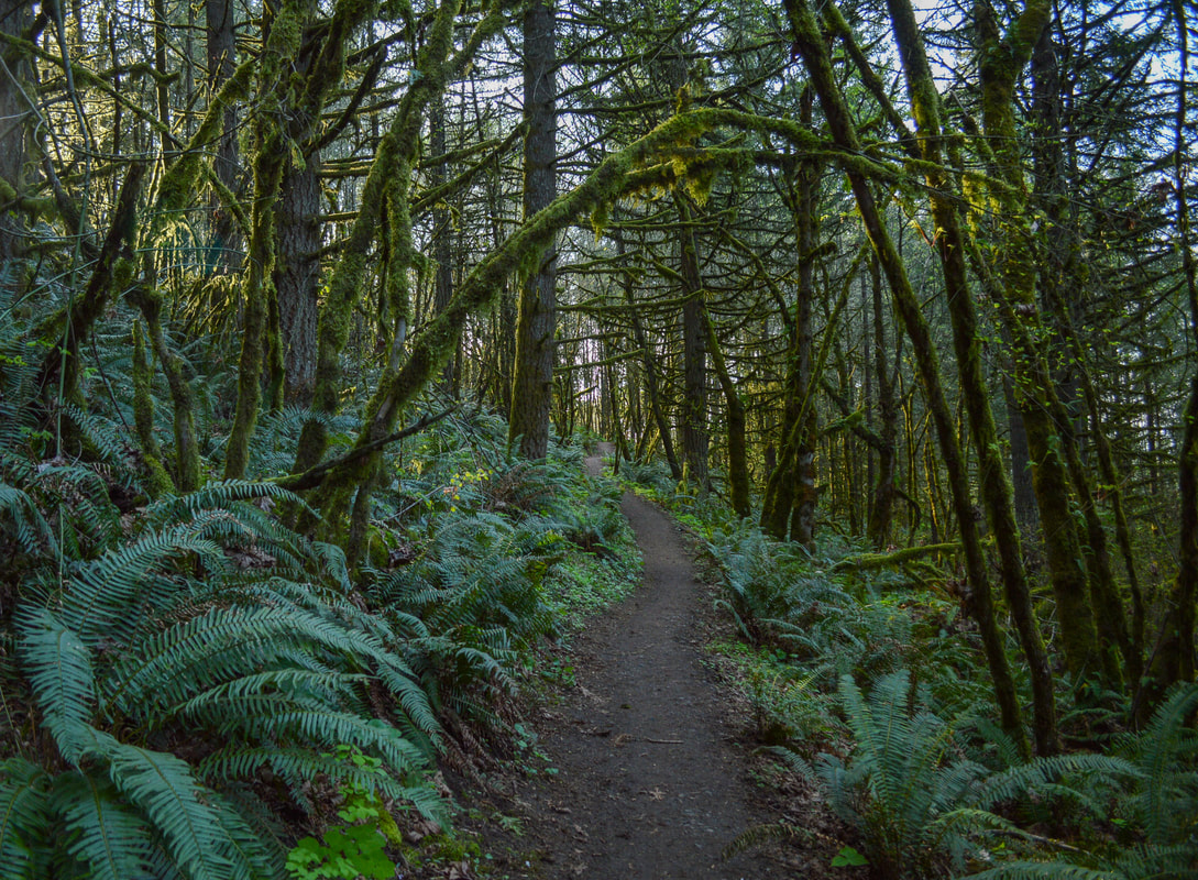 Silver Falls State Park best fall foliage hike in Oregon