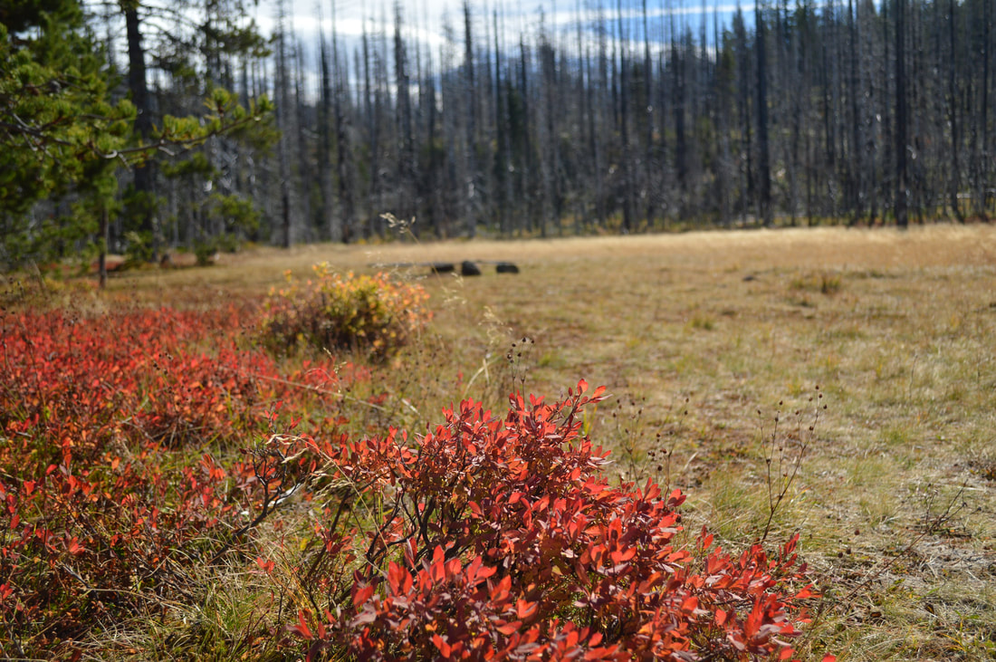Patjens Lakes best fall foliage hike in Oregon