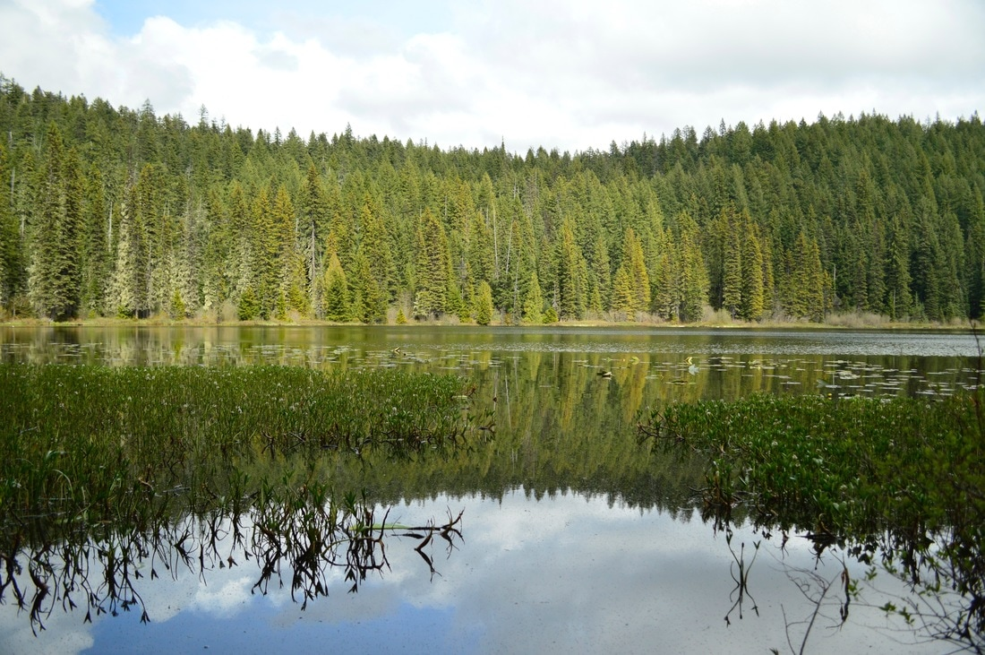 Otter Lake from Erma Bell Lakes loop trail