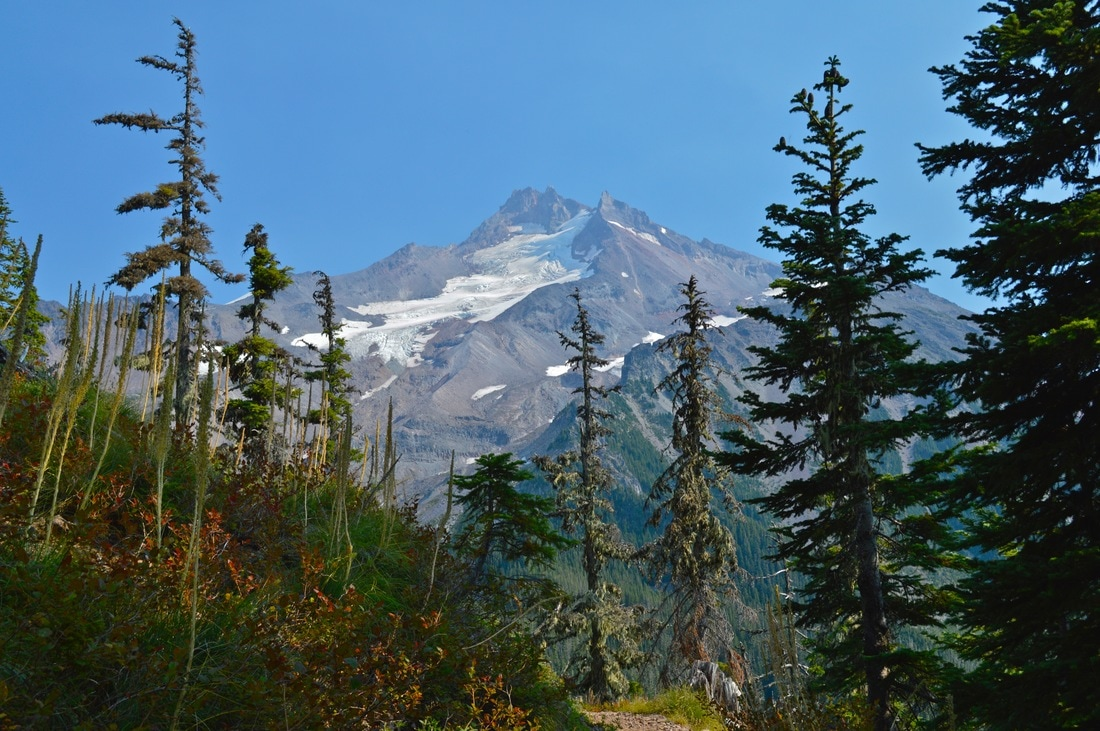 Mt. Jefferson from Whitewater Trail
