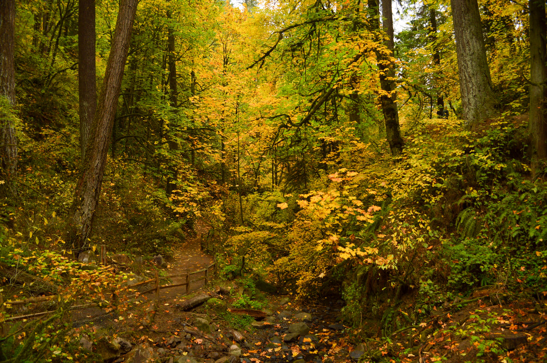 Lower Macleay Trail in the fall