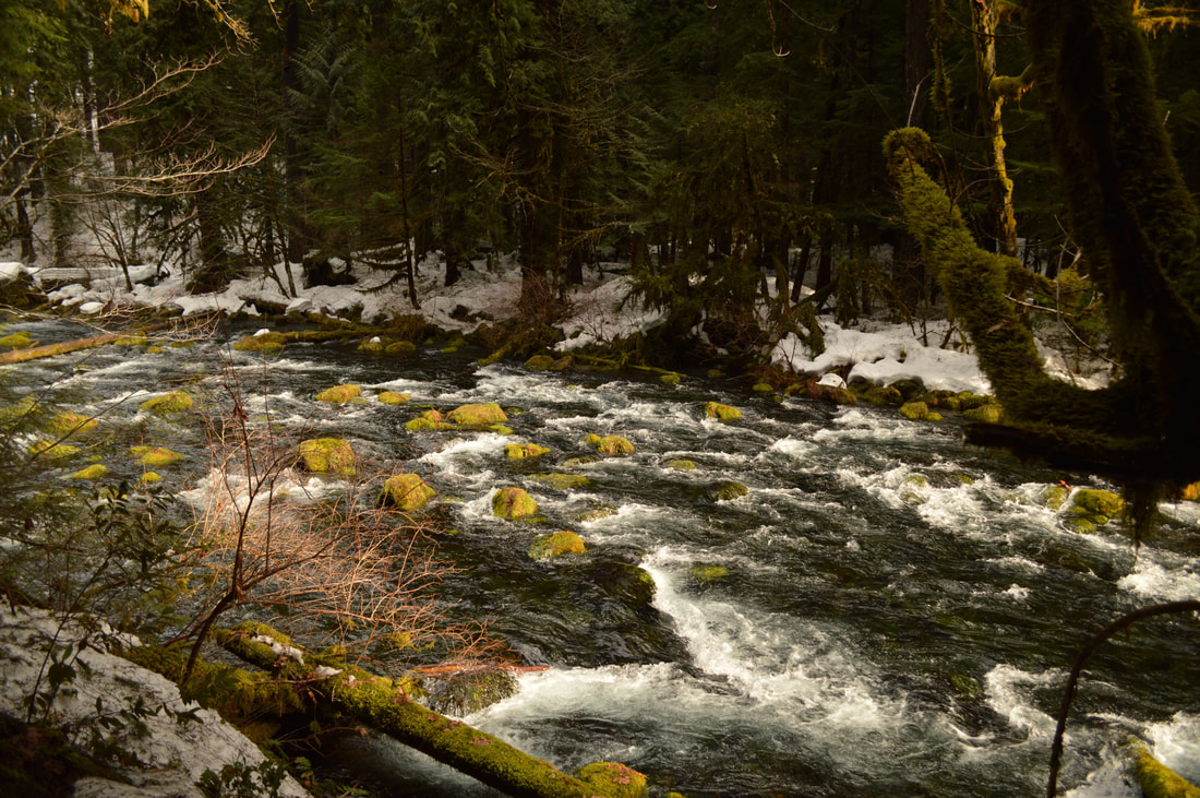 McKenzie River Trail top 10 Oregon winter hikes
