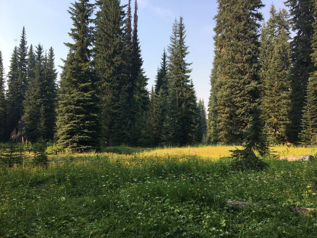 Meadow by South Waldo Lake Shelter