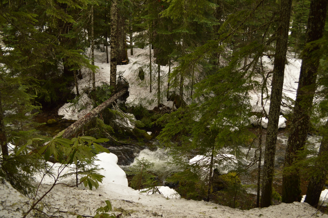 Salt Creek Falls top winter hike oregon