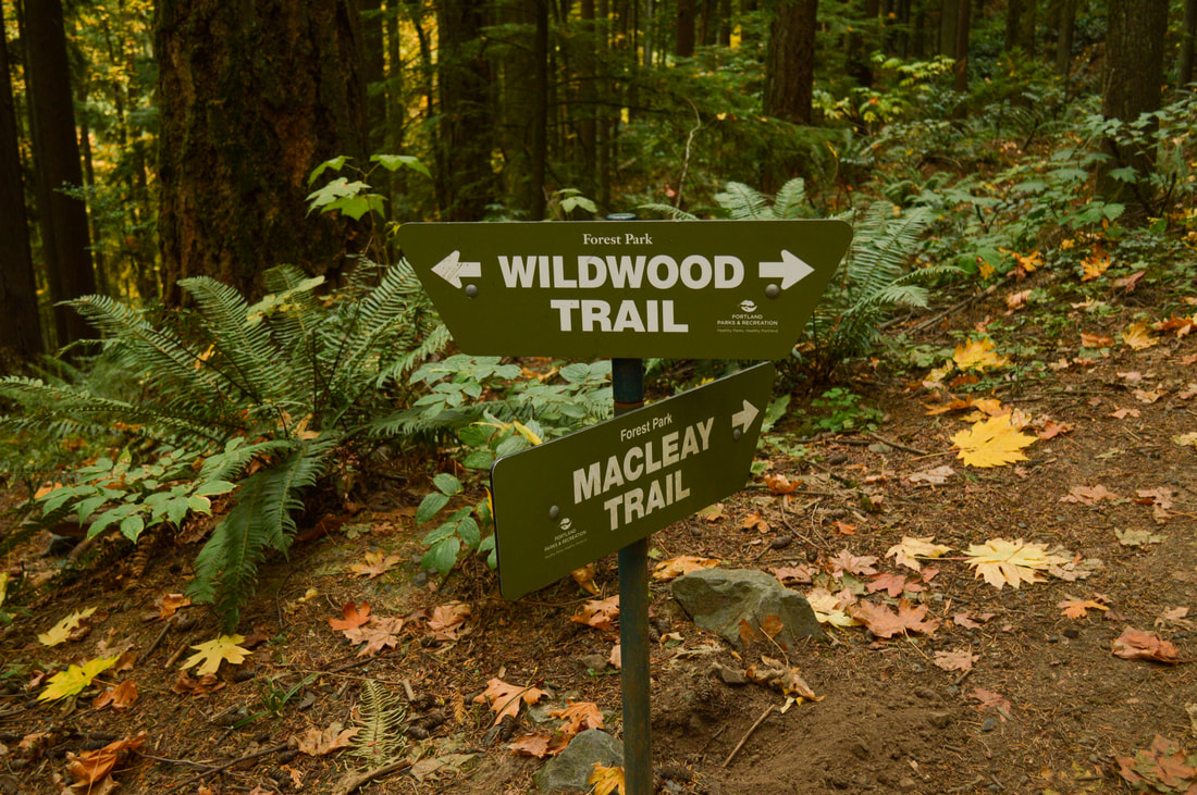 Wildwood Trail Macleay Trail junction